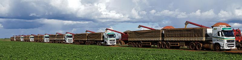 Conab projeta em 8% o crescimento da safra de grãos no Brasil